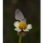 TGHalli_ButterflyPortrait_Torch