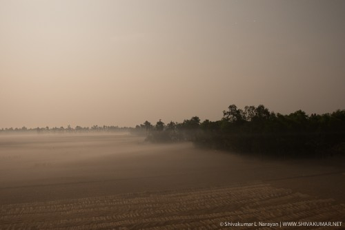 Moonlit landscapes of paddy fields in Sundarbans
